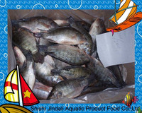 Export hot sale whole round frozen black tilapia in all size