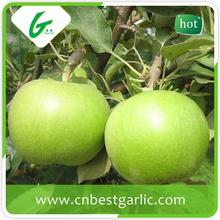 Organic fresh bulk fresh green apple prices