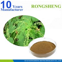 Pure Natural Nettle Leaf Extract Powder