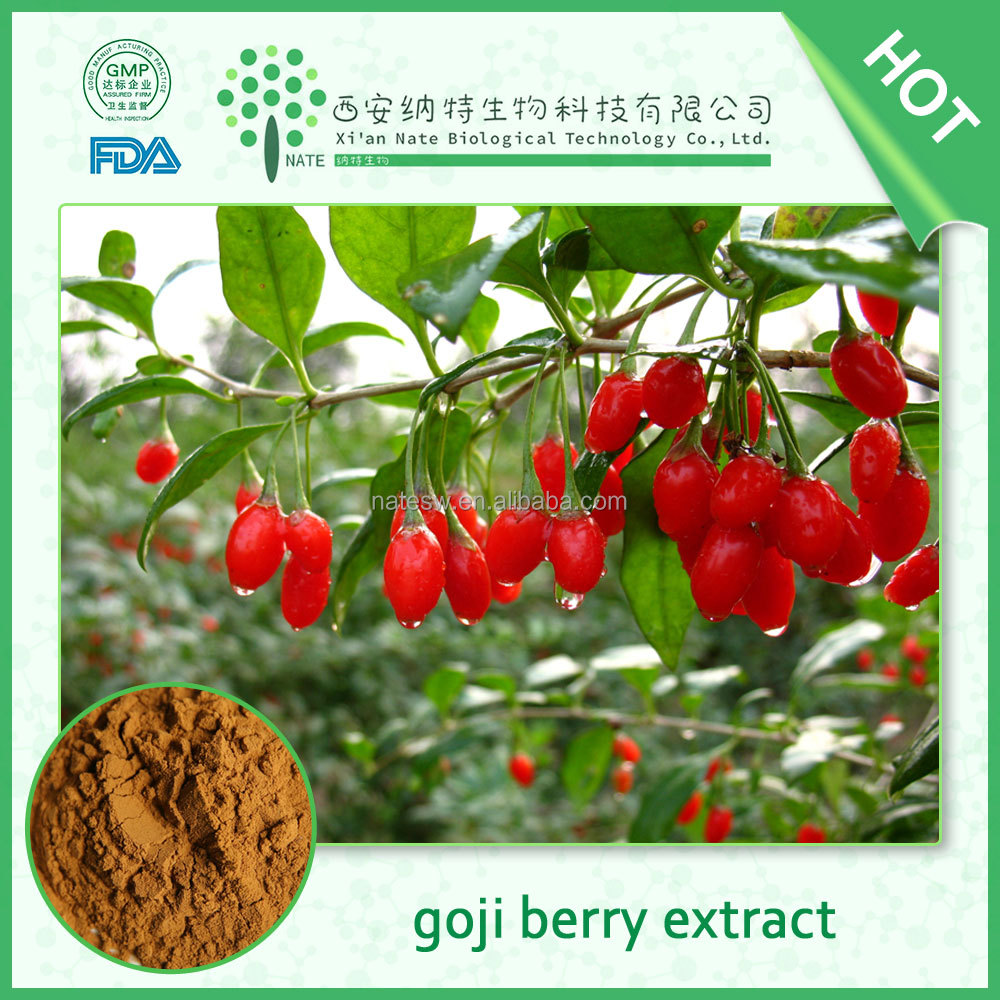 Free of samples Ningxia Goji Berry Extract, Lycium barbarum extract,Goji Powder in low price