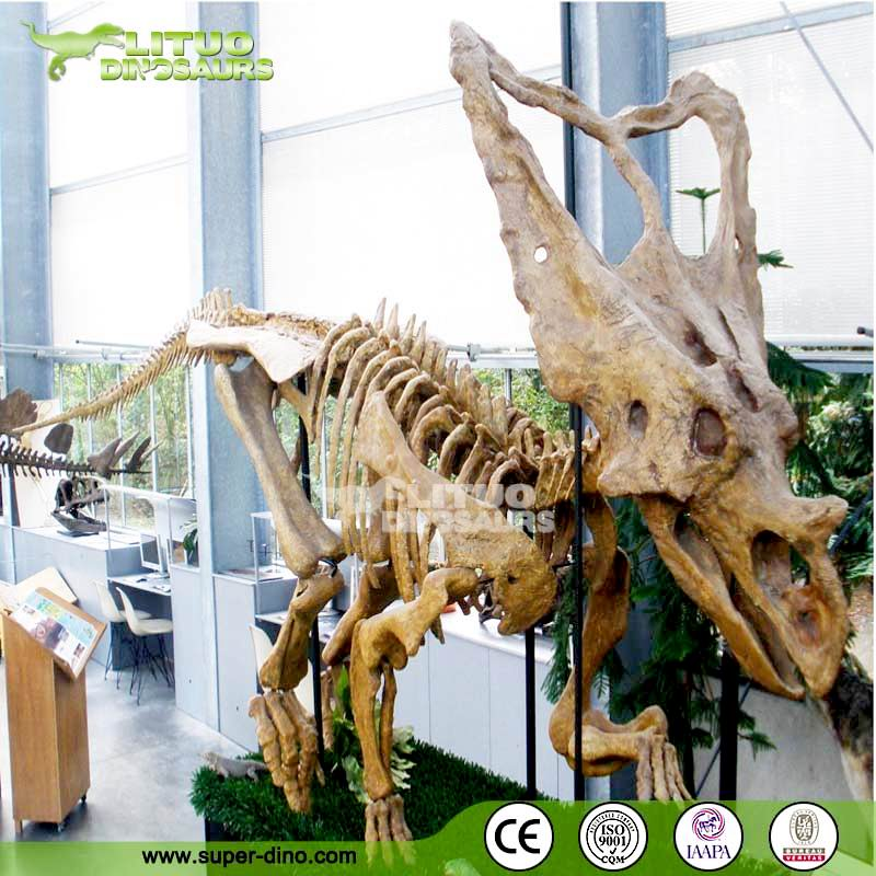 Museum Quality Dinosaur Fossil Skeleton Exhibition
