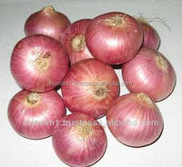 Buy Pure Indian Onion in Bulk
