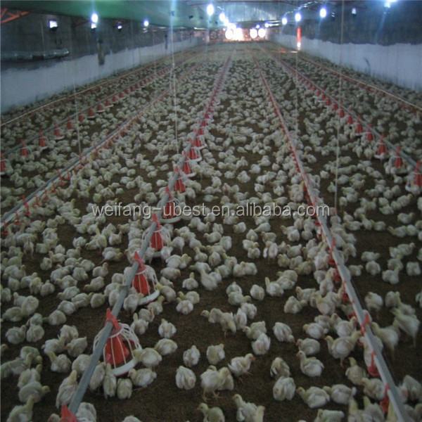 automatic rearing chicks broiler equipment