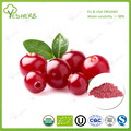 YesHerb supply organic cranberry extract powder