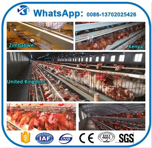 Professional ferret cage multilevel chicken cage for poultry farm with CE certificate