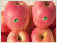Little red fresh fruit apple chinese<#80--#150 16KG>