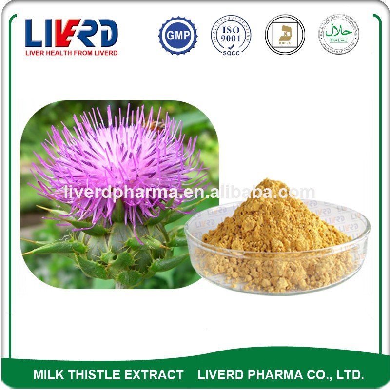 Blessed Thistle Yellow Powder Different Specs for Silymarin