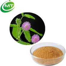 High quality Anti Venom Mimosa sensitive plant Pudica Extract