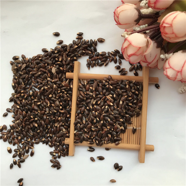 Hei gou qi 2019 new tree seeds chinese matrimony vine/lycium chinensis seeds