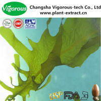 10%~40%focuxanthin natural undaria pinnatifida extract powder