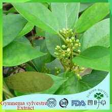Health protect gymnema sylvestre leaf for hair made in China