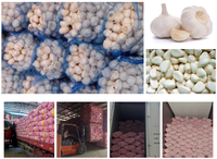 New crop best prices frozen garlic