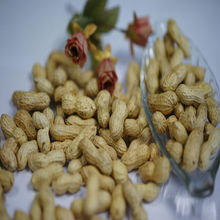 Roasted Groundnut in Shell (Large Size)