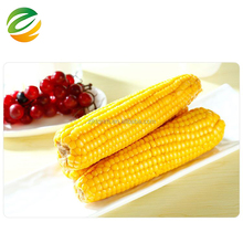 2018 the latest export Yellow Corn Maize / corn cob wholesale