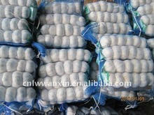 2011 chinese frehs laiwu1kg mesh bag garlic