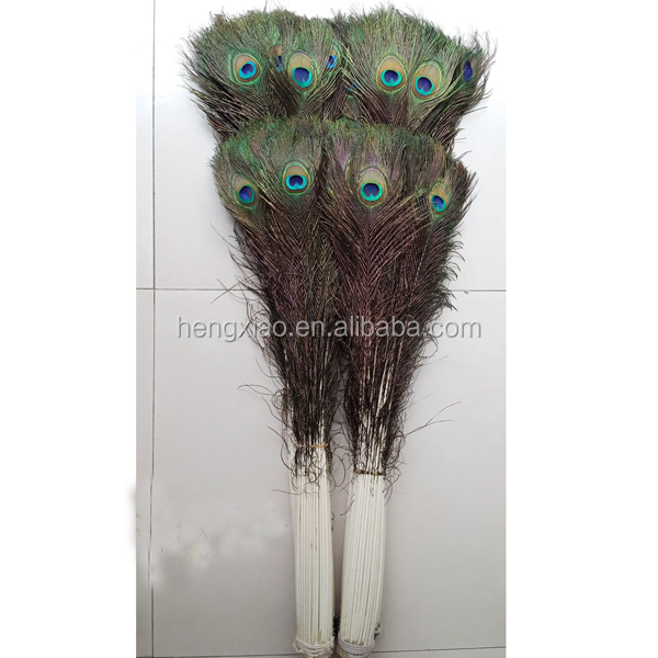 indian peacock feather trim
