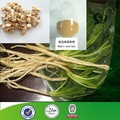 High quality Isatis root Powder,Radix isatidis Extract.Isatis tinctoria L
