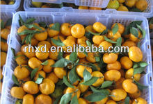 fresh yellow fruits/ citrus fruits/ mandarin <strong>orange</strong>