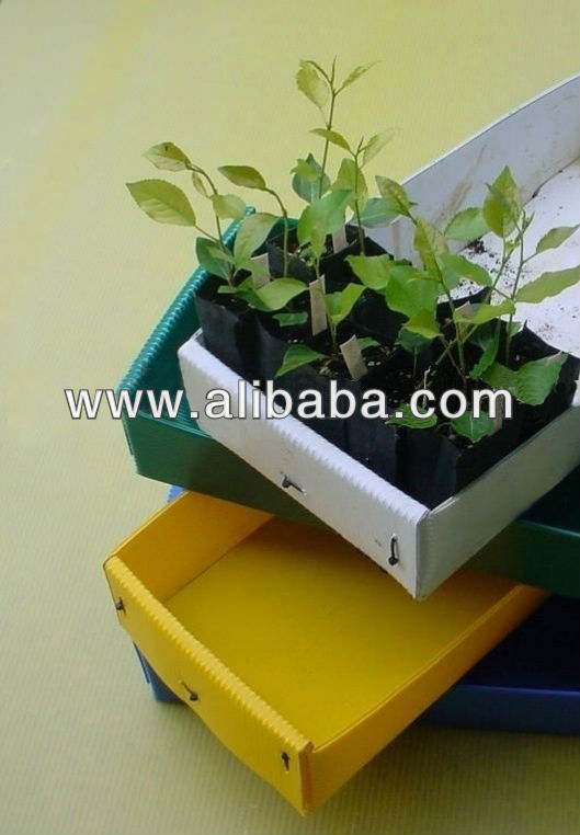 corrugated pp sheet flower seed tray -cartonplast Tray- palstic hollow sheet Tray