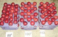 Chinese Huaniu Apple for Sale