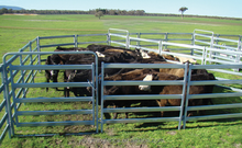 australia hot sales galvanized metal yard fence panel for animals/livestocks