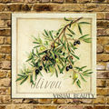 Olive Branch Canvas Fine Art/Vintage Frames Photo/Green Leaf Canvas Art