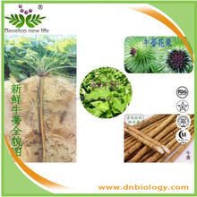 Top quality 100% Natural Burdock root extract powder Arctiin ,Fructus arctii extract