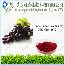 Natural Proanthocyanidins Extract from Grape Seed Extract powder 95%OPC