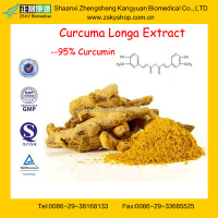 GMP Manufacturer Supply Best Selling Turmeric Root Extract Powder 95% Curcumin