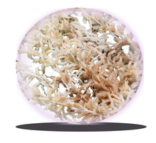 dried moss / sphagnum moss for orchids on sale from china