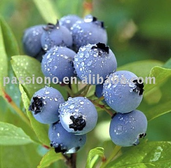 Featured product Antioxidant Bilberry Extract/ Bilberry 25%