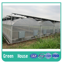 PVC/PE/PO film greenhouse plastic greenhouses
