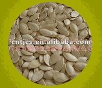 Chinese shine skin pumpkin seeds11cm-12cm