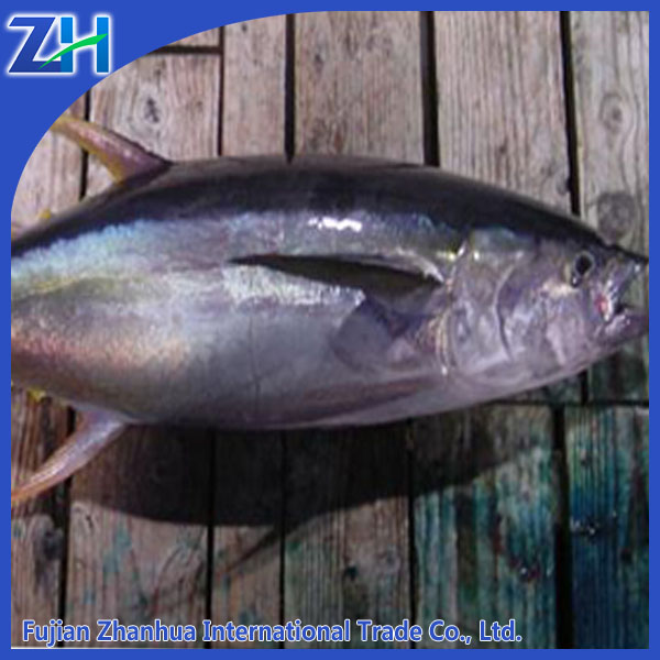 super frozen fresh yellowfin tuna fish price