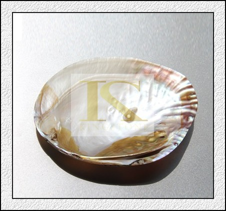 Manfacturer raw material mother of pearl (Direct Factory + Good Price )