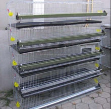 quail broiler cage / feeding system for sale