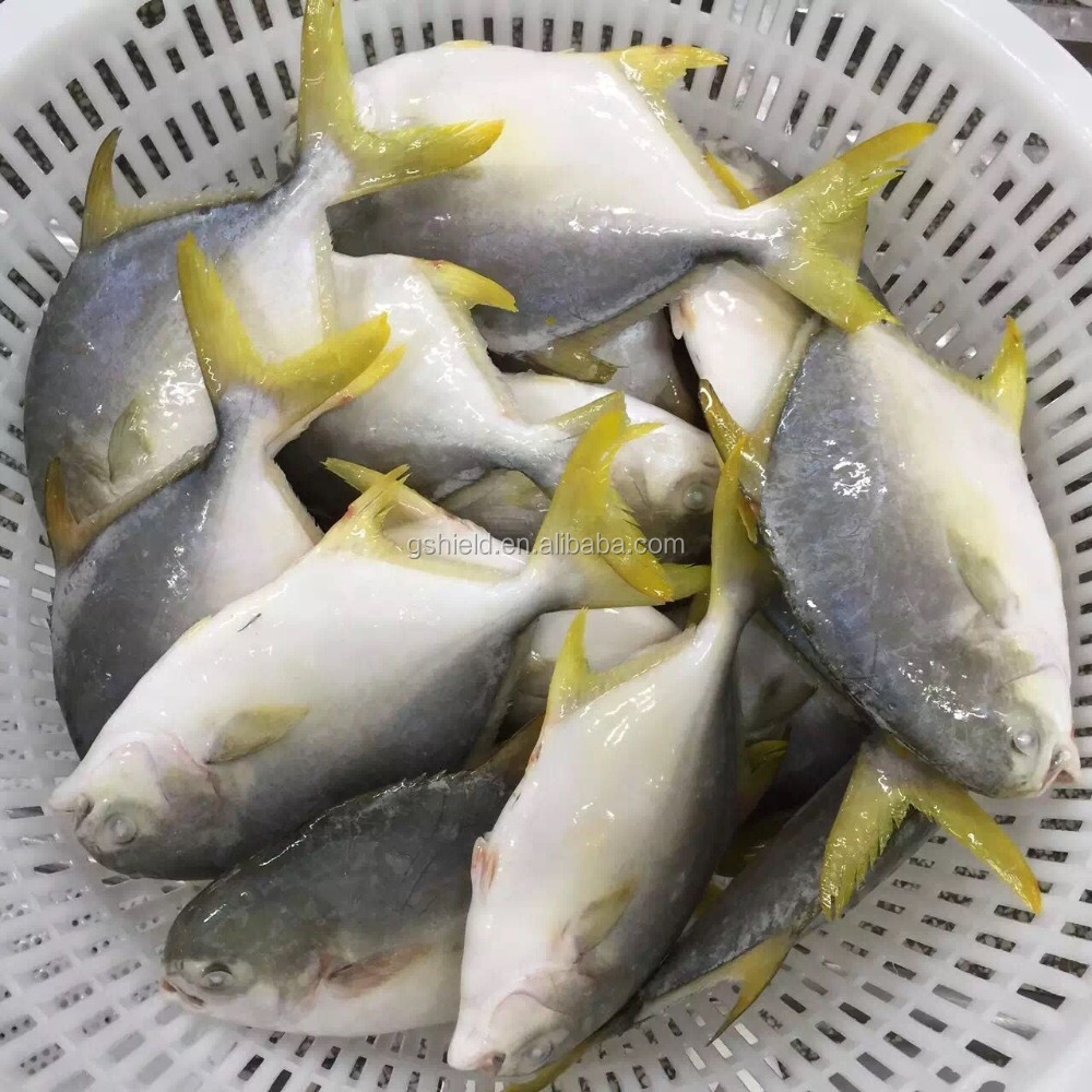 New Coming Frozen <strong>Fish</strong> Golden Pomfret