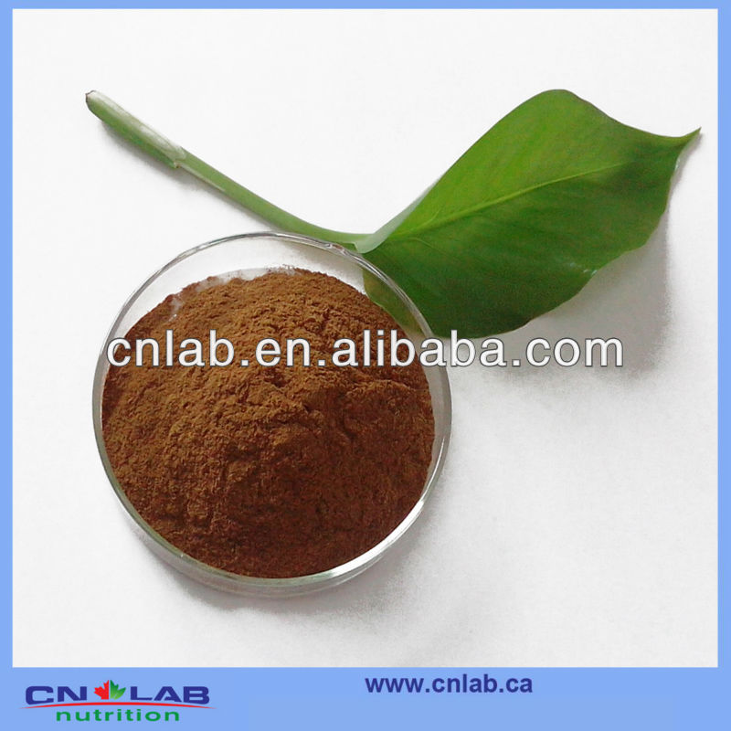 Dong Guai Root Extract Ligustilide 1% HPLC