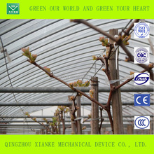 Cheap greenhouse agriculture for grape sale