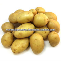 Export Quality Potatoes from India