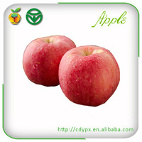 best quality export fresh red delicious apple fruit fresh apple edible fruit