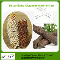 Sex strong medicine for men organic Desertliving Cistanche Herb Extract Cistanche tubulosa Extract powder