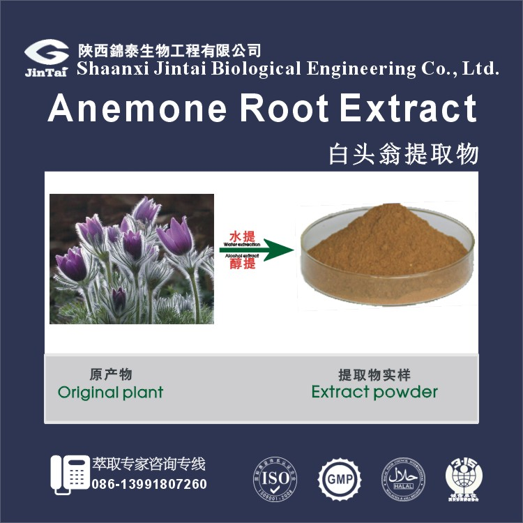 pure natural 10:1 50:1 100:1 bulk anemone root extract