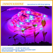 Red Blue 4:1 5:1 Full spectrum DC12V smd 5050 strip led grow lighting for Greenhouse Hydroponic Plant Growing hong kong