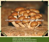 Canned and Frozen Food Mushroom Products