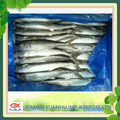 scientific name of mackerel fish frozen