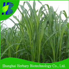High germination rate Sudan grass seeds for farm