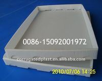 Plastic PP Corrugated Bottle Packing Tray / Box