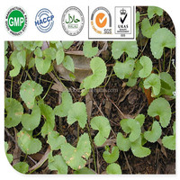 Cosmetic Grade Centella Asiatica P.E./Gotu Kola Extract Powder Asiaticosides For Skin Whitening