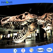 Innova-realistic Large dinosaur skeleton model for indoor exhibition